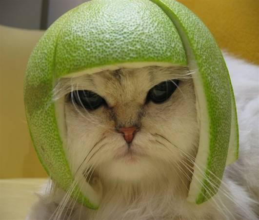 cat41.jpg
